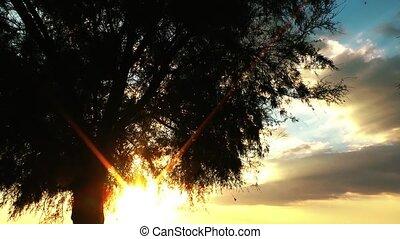 солнце, дерево