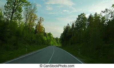 солнце, дорога, лес
