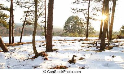 солнце, лес, зима