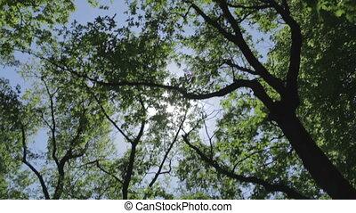 солнце, лес