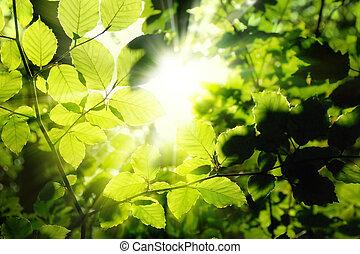 солнце, обрамление, листва