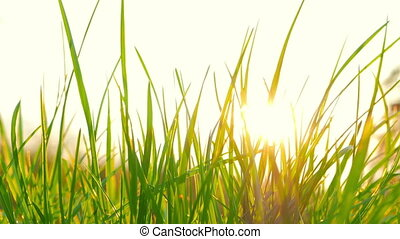 солнце, свежий, трава