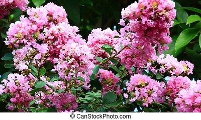 солнце, цветы, розовый