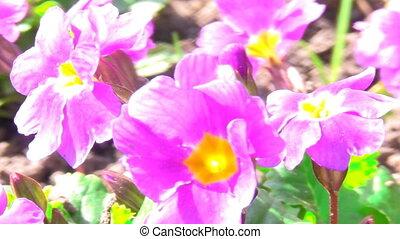 солнце, цветы