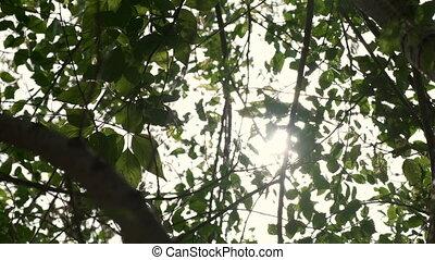 солнце, leaves, через