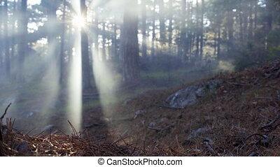 солнце, rays, туман, пейзаж, лес