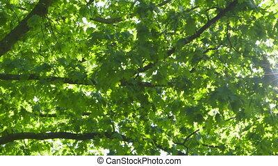 солнце, trees, против