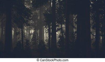 сосна, хобот, черный, лес, темно, дерево