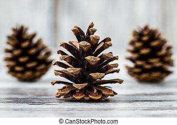 сосна, cones