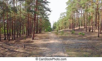 сосновый лес, пешеходная дорожка
