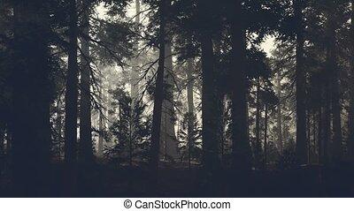 сосновый лес, черный, хобот, дерево, темно