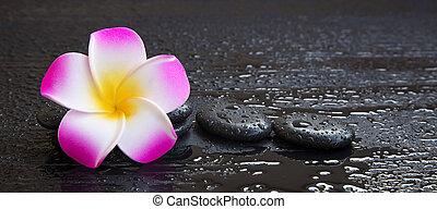 спа, все еще, жизнь, with, plumeria, цветок