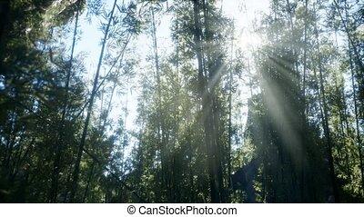 спокойный, бамбук, лесок, arashiyama, ветреный