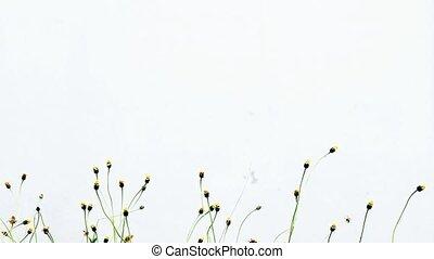 стена, белый, трава, цветы