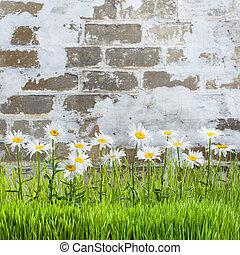 стена, цветы