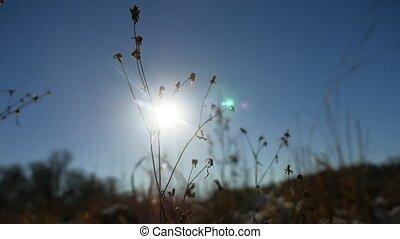 сухой, силуэт, зима, природа, снег, поле, трава, пейзаж