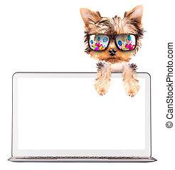 с помощью, компьютер, собака