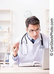 тело, explaining, скелет, человек, врач