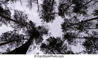 темно, посмотреть, trunks, жутко, forest., против, ветви, дерево, небо, штормовой, дно
