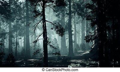темно, сосновый лес, дерево, хобот, черный