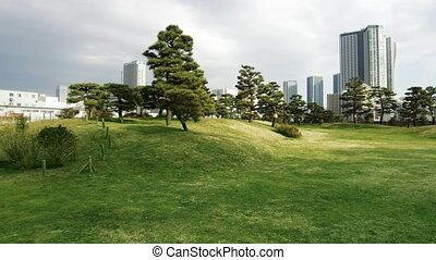 токио, парк, сосна, trees, hamarikyu, gardens