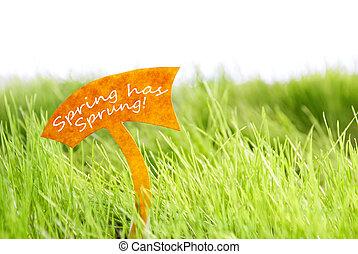 трава, весна, захмелевший, метка, зеленый, has