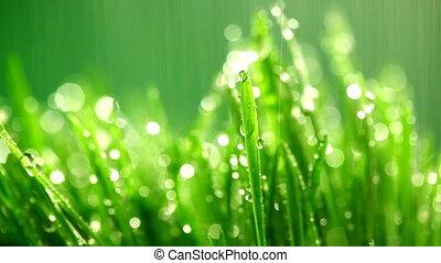 трава, зеленый, дождь, под