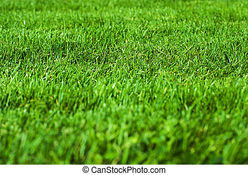 трава, зеленый