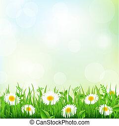трава, маргаритка
