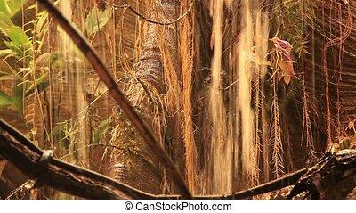 тропический, лес, дождь