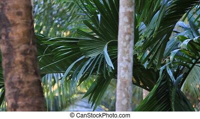 тропический, лес