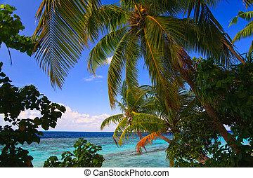 тропический, мальдивы, рай