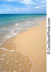 тропический, пляж, обелить, карибский
