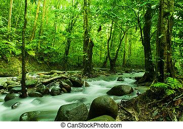 тропический, поток, flowing