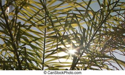 тропический, растение, filtering, через, солнечный лучик