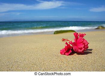 тропический, цветок, пляж