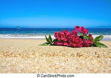 тропический, цветы, пляж