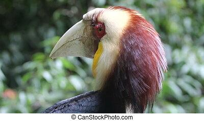 тропический, birds, лес