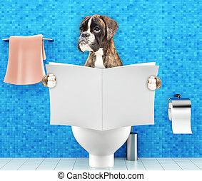 туалет, пищеварение, запор, сидящий, проблемы, собака, сиденье, журнал, боксер, газета, чтение, или