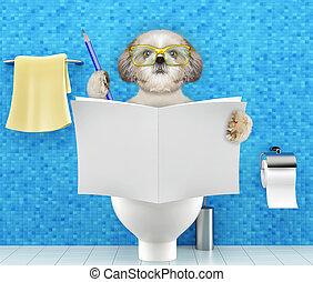 туалет, пищеварение, запор, сидящий, проблемы, собака, сиденье, журнал, чтение, газета, письмо, или