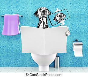 туалет, пищеварение, запор, сидящий, selfie, проблемы, собака, сиденье, журнал, газета, изготовление, чтение, или