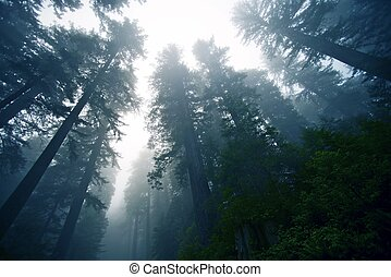 туманный, лес, глубоко