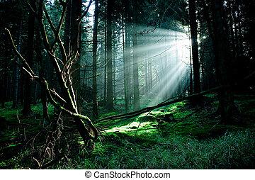 туманный, лес