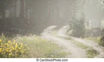 туманный, стоять, sunbeams, entering, лето, утро, хвойный