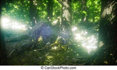 туманный, rays, солнце, утро, лес, весна
