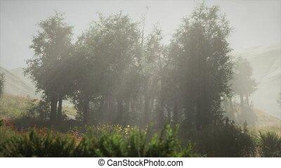 туманный, sunbeams, стоять, entering, хвойный, утро, лето
