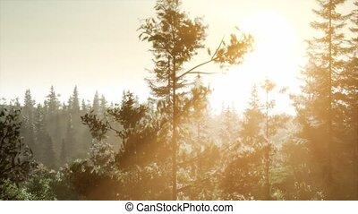 туман, лес, утро, туманный, рано, нордический