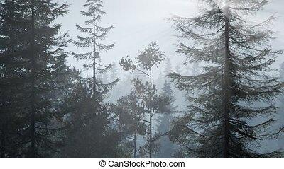 туман, рано, нордический, туманный, утро, лес
