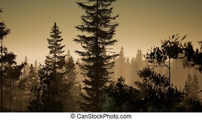 туман, рано, туманный, утро, лес, нордический