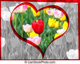 тюльпан, красный, валентин